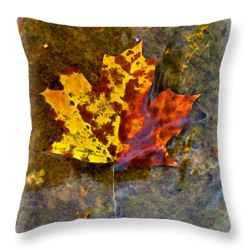 Botanical Throw Pillow featuring the digital art Autumn Maple Leaf In Water by Debbie Portwood