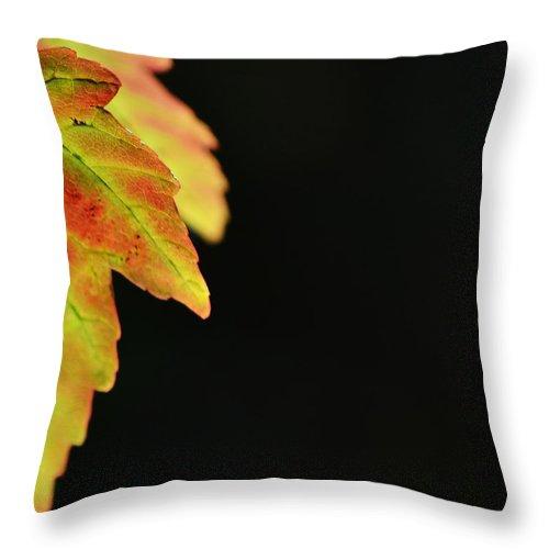Autumn Throw Pillow featuring the photograph Autumn Surprise by Melanie Moraga