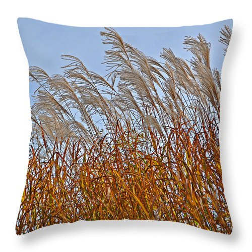 Afternoon Throw Pillow featuring the photograph Autumn Wind Through The Grass by Mary Machare