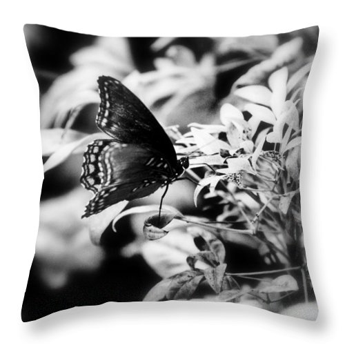 Black And White Throw Pillow featuring the photograph B N W Butterfly by Sheri Bartoszek