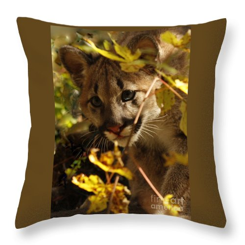 Baby Cougar Playing Peek A Boo In Autumn Forest Throw Pillow featuring the photograph Baby Cougar Playing Peek A Boo In Autumn Forest by Inspired Nature Photography Fine Art Photography