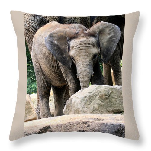 African Elephant Throw Pillow featuring the photograph Baby Elephant by Angela Rath