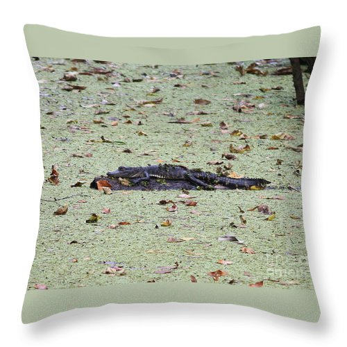 Gator Throw Pillow featuring the photograph Baby Gator In The Swamp by Carol Groenen