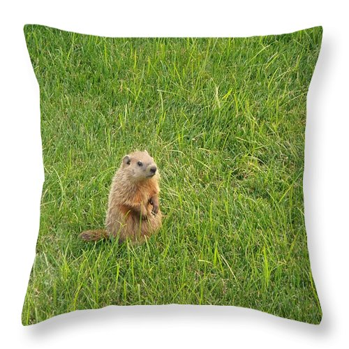 Groundhog Throw Pillow featuring the photograph Baby Groundhog by Kimberly Perry