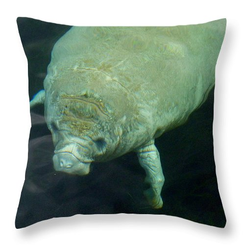 Manatee Throw Pillow featuring the photograph Baby Manatee by Carla Parris