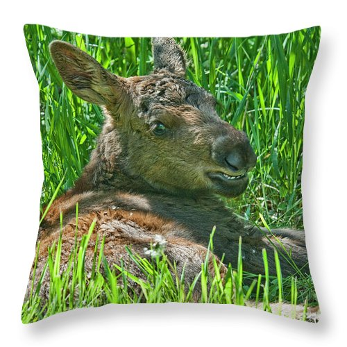 Moose Baby Throw Pillow featuring the photograph Baby Moose by Gary Beeler