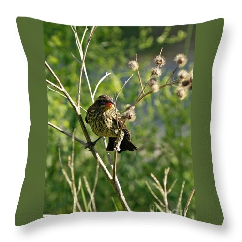 Baby Red Wing Black Bird Calling For Mother Throw Pillow featuring the photograph Baby Red Wing Black Bird Calling For Mother by Inspired Nature Photography Fine Art Photography
