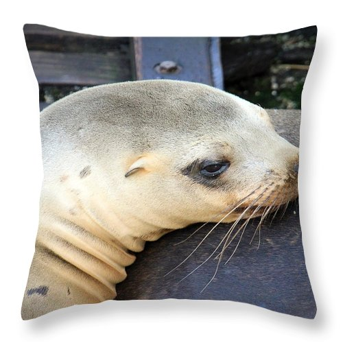 Baby Seal Throw Pillow featuring the photograph Baby Seal by Steve McKinzie