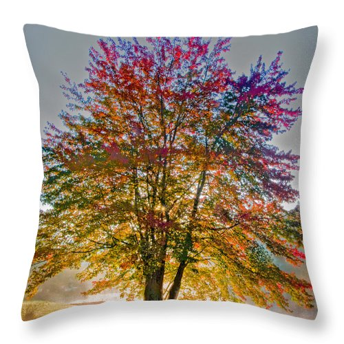 Maple Throw Pillow featuring the photograph Backlit Maple In Autumn's Light by Rob Travis