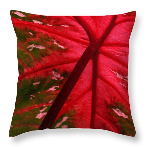 Leaf Throw Pillow featuring the photograph Backlit Red Leaf by Sabrina L Ryan