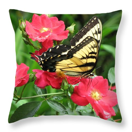 Butterfly Throw Pillow featuring the photograph Backyard Beauty by Carol Sweetwood