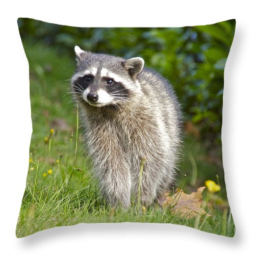 Photography Throw Pillow featuring the photograph Backyard Visitor by Sean Griffin