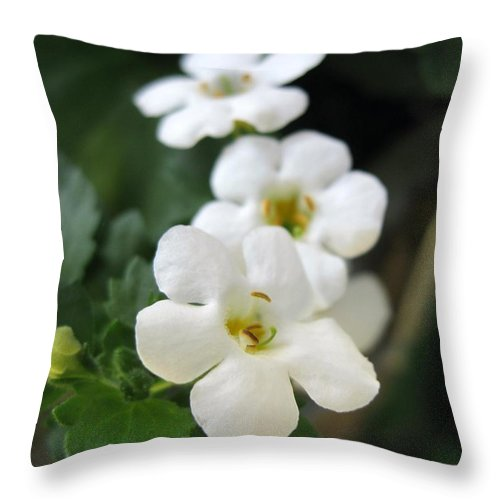 Bacopa Throw Pillow featuring the photograph Bacopa Named Snowtopia by J McCombie