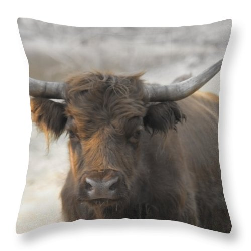 Scottish Highlander Throw Pillow featuring the photograph Bad Hair Day V2 by Douglas Barnard