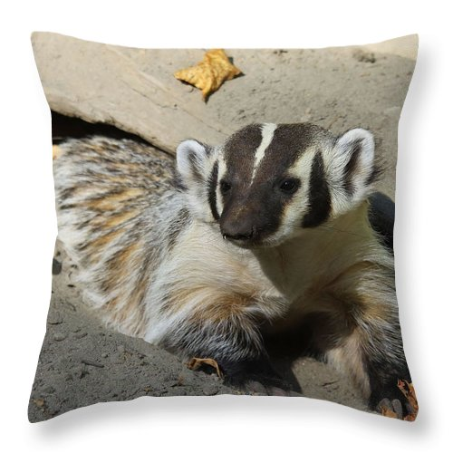 Wildlife Throw Pillow featuring the photograph Badger by Steve McKinzie