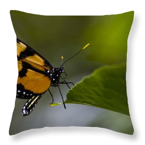 Butterfly Throw Pillow featuring the photograph Balancing Act by Heather Applegate