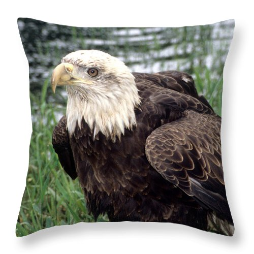 Bald Eagle Throw Pillow featuring the photograph Bald Eagle At Riverside by Larry Allan