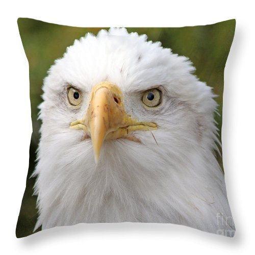 Bald Eagle Throw Pillow featuring the photograph Bald Eagle by Jack Schultz