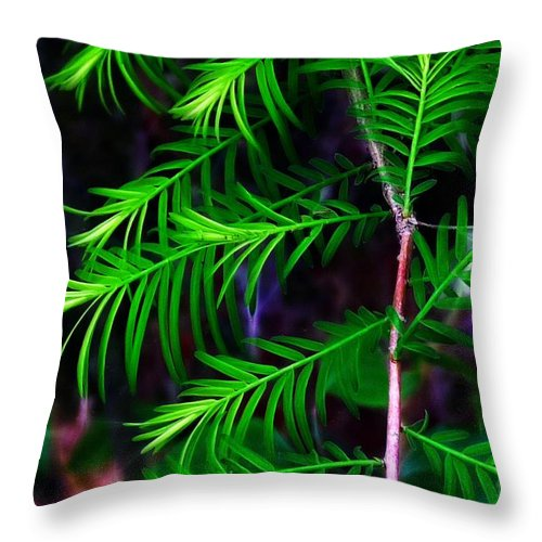 Baldcypress Throw Pillow featuring the photograph Baldcypress by Judi Bagwell