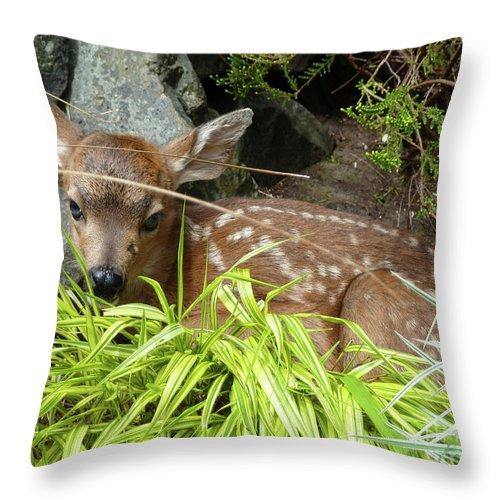 Animal Throw Pillow featuring the photograph Bambino by Lauren Leigh Hunter Fine Art Photography