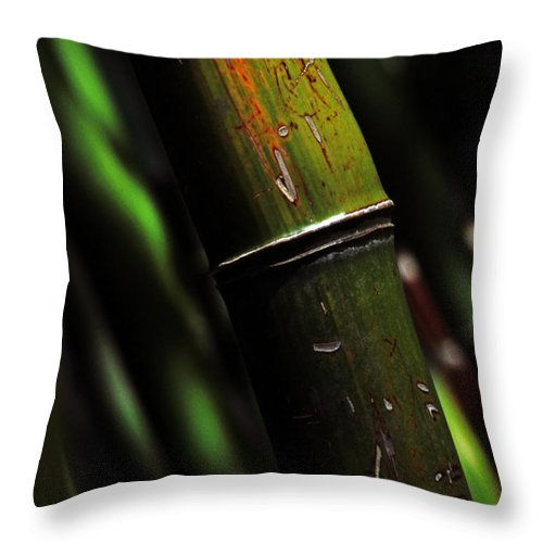 Bamboo Throw Pillow featuring the photograph Bamboo by Karol Livote