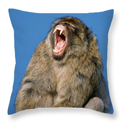Fn Throw Pillow featuring the photograph Barbary Macaque Macaca Sylvanus Yawning by Martin Woike