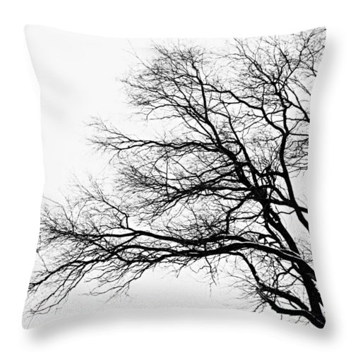 Photography Throw Pillow featuring the photograph Bare Tree Silhouette by Larry Ricker