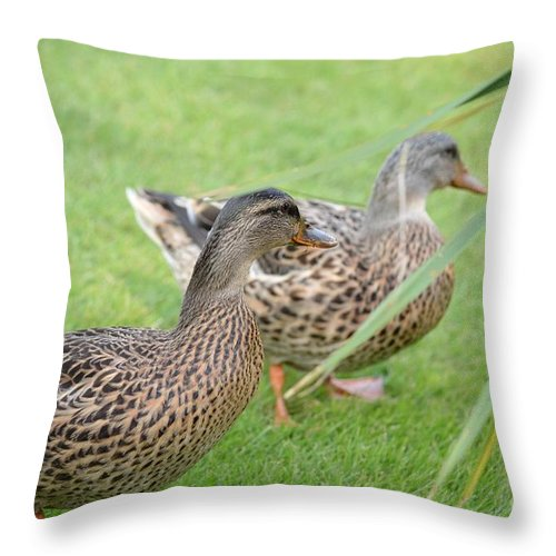 Barefoot Throw Pillow featuring the photograph Barefoot Stroll In The Grass by Maria Urso