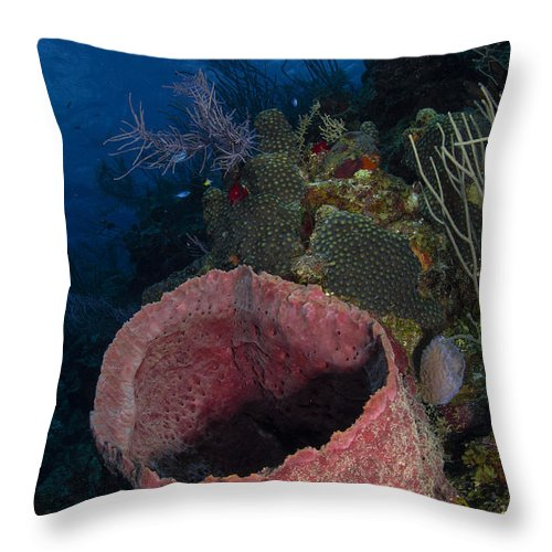 Sea Life Throw Pillow featuring the photograph Barrel Sponge Seascape, Belize by Todd Winner