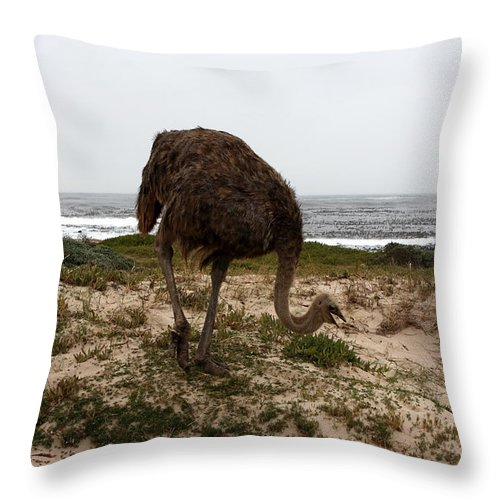Ostrich Throw Pillow featuring the photograph Beach Bird by Aidan Moran