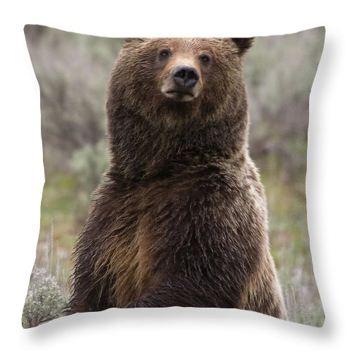 Grizzly Bear Throw Pillow featuring the photograph Bear 399 by Steve Stuller
