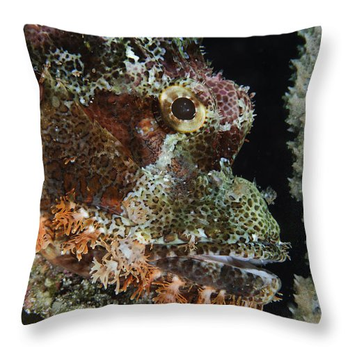 Ocean Throw Pillow featuring the photograph Bearded Scorpionfish, Indonesia by Todd Winner