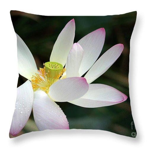 Lotus Throw Pillow featuring the photograph Beatutiful Wet Lotus by Sabrina L Ryan