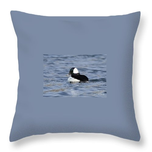 Beautiful Bufflehead Duck At The Lake Throw Pillow featuring the photograph Beautiful Bufflehead Duck At The Lake by Inspired Nature Photography Fine Art Photography