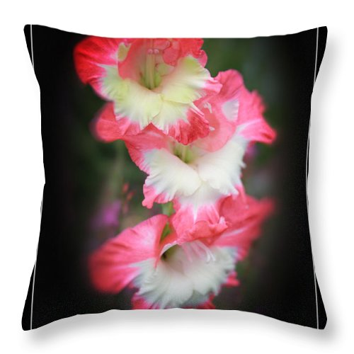 Beautiful Gladiolus Throw Pillow featuring the photograph Beautiful Gladiolus by Heinz G Mielke