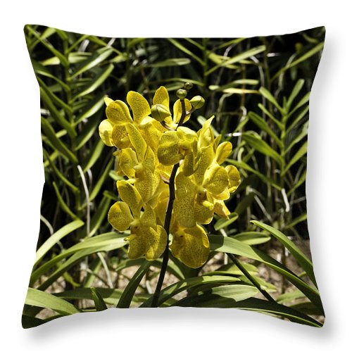 Asia Throw Pillow featuring the photograph Beautiful Yellow Flowers Inside The National Orchid Garden In Si by Ashish Agarwal