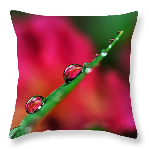Photography Throw Pillow featuring the photograph Beauty After The Rain by Kaye Menner