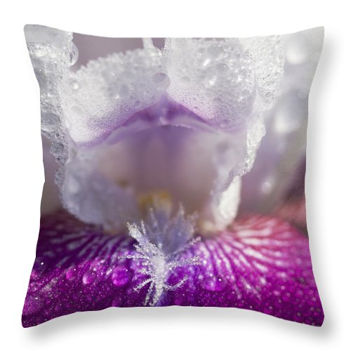 Iris Germanica Throw Pillow featuring the photograph Bedazzled Purple And White Iris by Kathy Clark