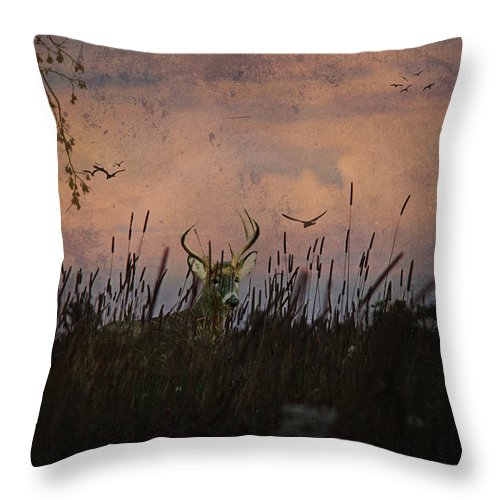 Deer Throw Pillow featuring the photograph Bedding Down For Evening by Lianne Schneider
