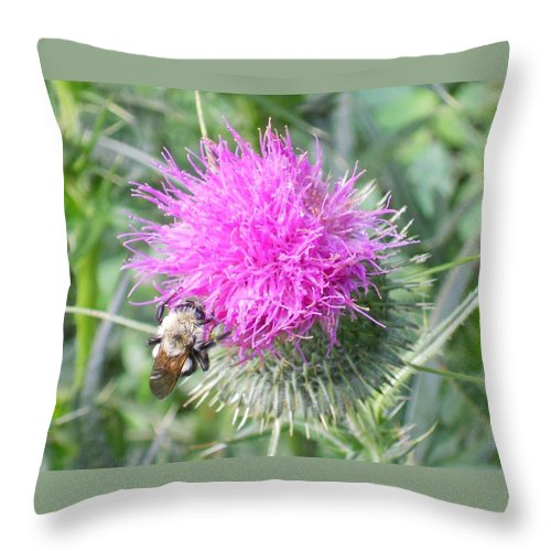 Nature Throw Pillow featuring the photograph Bee And Thisle by Sharon Gihr