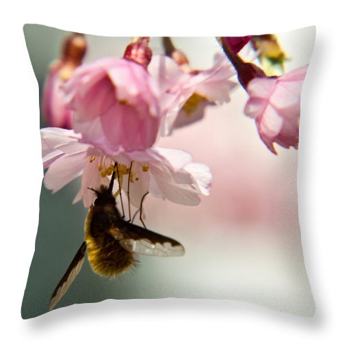 Bombyliidae Throw Pillow featuring the photograph Bee Fly Feeding 2 by Douglas Barnett