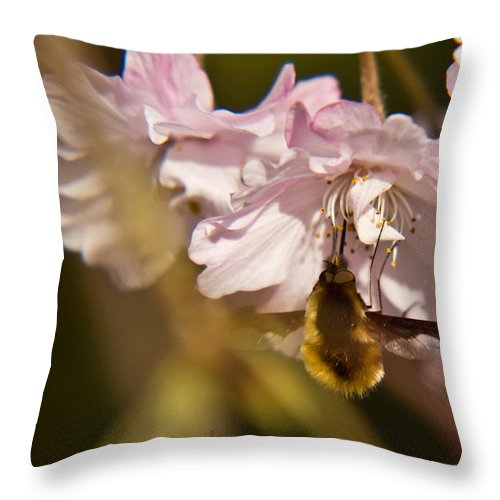 Bee Throw Pillow featuring the photograph Bee Fly Sucking Nectar 1 by Douglas Barnett