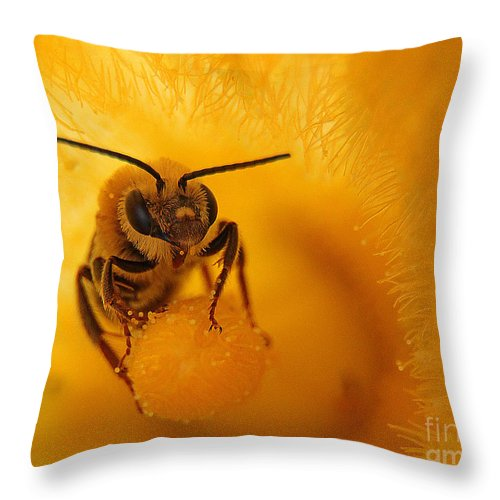 Bee Throw Pillow featuring the photograph Bee On Squash Flower by Jack Schultz
