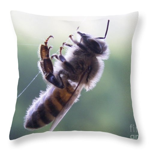 Insects Throw Pillow featuring the photograph Bee Web by Jim Caudill
