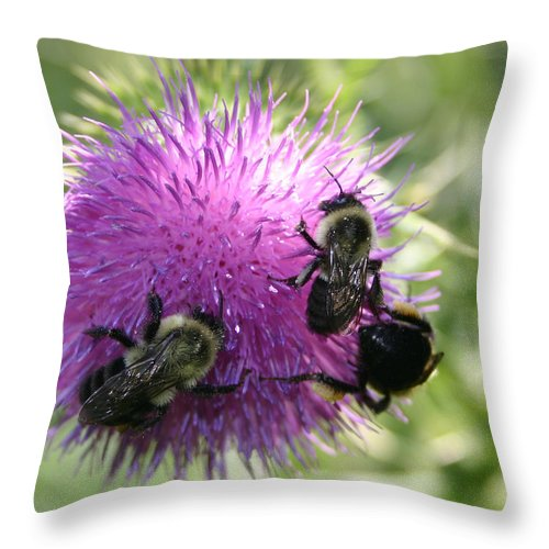 Bug Throw Pillow featuring the photograph Bees On Thistle by Nina Fosdick