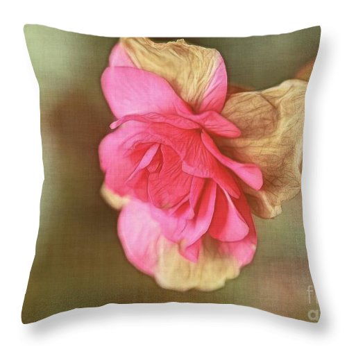 Begonia Throw Pillow featuring the photograph Begonia by Judi Bagwell