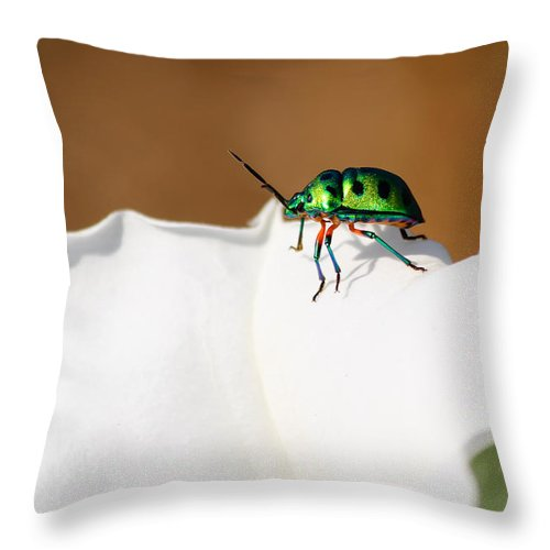Jewel Bug Throw Pillow featuring the photograph Bejewelled by Saurav Pandey