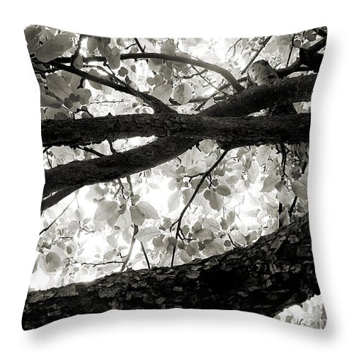 Apple Tree Throw Pillow featuring the photograph Beneath The Old Apple Tree by Angie Rea