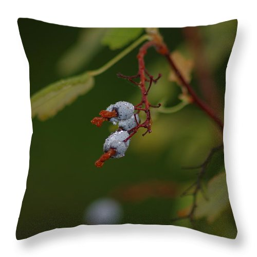 Throw Pillow featuring the photograph Berry by Marilyn Wilson