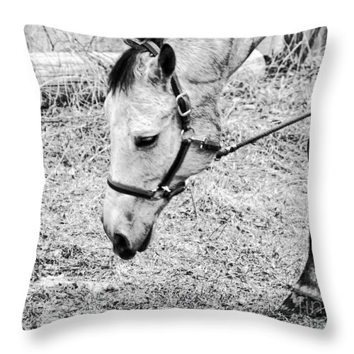 Horse Throw Pillow featuring the photograph Best Foot Forward by Traci Cottingham